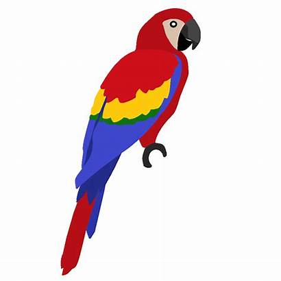 Bird Parrot Clip Macaw Clipart Beak Parrots