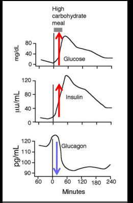 blood glucose levels   fed  fasting states
