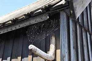 Mittel Gegen Spinnen Im Haus : anti spinnen spray gegen spinnen ~ Buech-reservation.com Haus und Dekorationen
