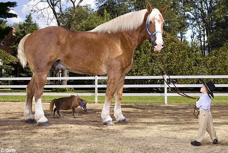 Heaviest Pumpkin Ever Recorded by The World S Tallest Horse Meets The World S Smallest