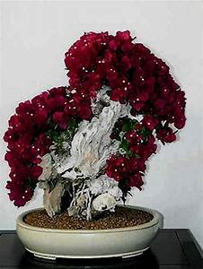 i just love this pretty bonsai tree With feuerstelle garten mit bonsai 100 years old