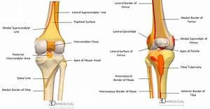 Knee Femur Diagram