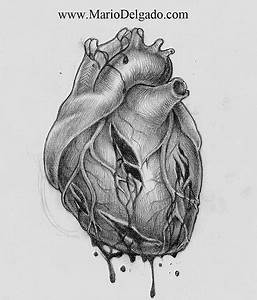 Real Heart Sketch   Free Download Clip Art   Free Clip Art ...