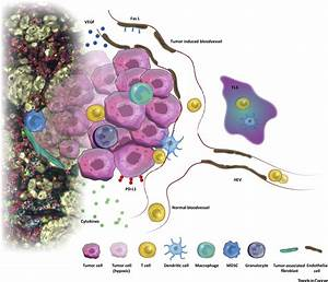 Migrating Into The Tumor  A Roadmap For T Cells  Trends In