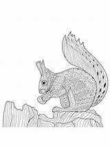 Coloring Squirrel Zentangle Adults Adult Printable Mycoloring sketch template