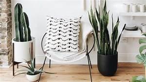 Plante Intérieur Grimpante : plante int rieur cactus d co et tendance c t maison ~ Louise-bijoux.com Idées de Décoration