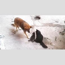 Clever Dog Figures Out Tugofwar Strategy