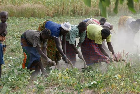 Young people plowing the land, Burkina Faso | Young people ...