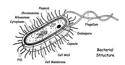 science gram positive bacteria