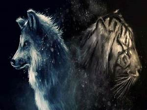 Wolf And Tiger ... Wolf Vs Tiger Quotes