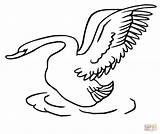 Swan Coloring Pages Drawing Taking Swans Head Printable Supercoloring Getdrawings Clipart Categories sketch template