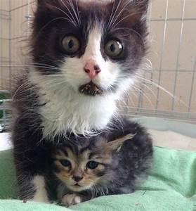 Gravidanza dei gatti: quanto dura Idee Green