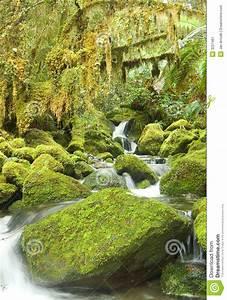 Kalter Wintergarten Preise : kalter regenwald in neuem zeland stockbild bild 3257481 ~ Michelbontemps.com Haus und Dekorationen