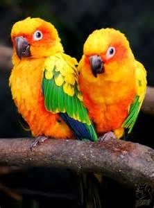 Bird Sun Conure Parrot