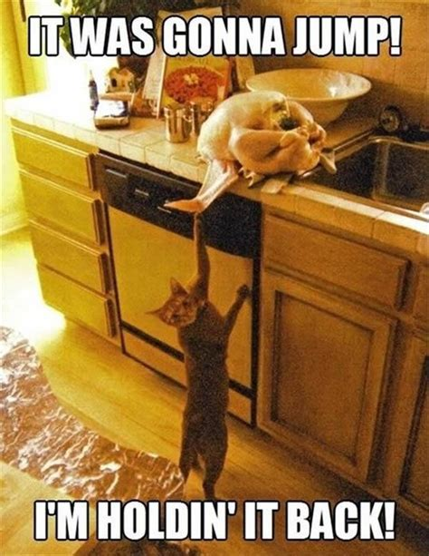 Thanksgiving Cat Meme - 9 things cat owners experience on thanksgiving meowingtons