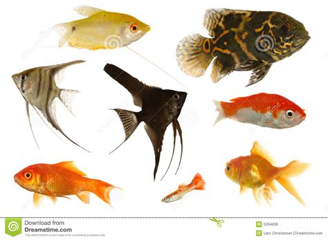 poissons d aquarium photo stock image du assorti aqua