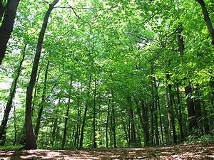 Bilder Vom Wald : schwerter wald wikipedia ~ Yasmunasinghe.com Haus und Dekorationen
