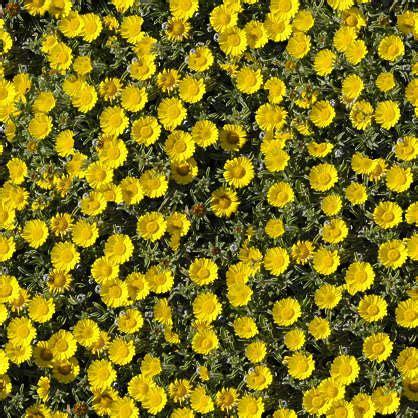 flowerbeds  background texture ground