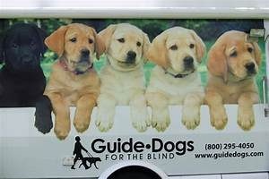 Pin by Elisha Silva on Guide Dogs for the Blind! | Pinterest