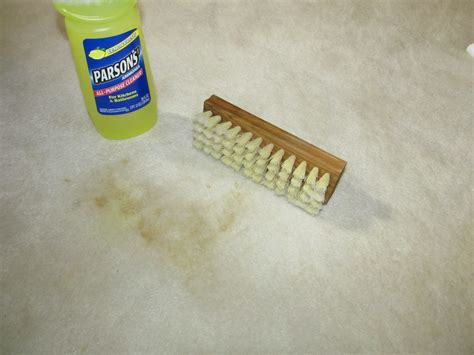How Do You Remove Old Coffee Stains From Carpet   Myminimalist.co