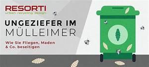 Was Tun Gegen Maden Im Mülleimer : maden fruchtfliegen ameisen im m lleimer resorti blog ~ A.2002-acura-tl-radio.info Haus und Dekorationen