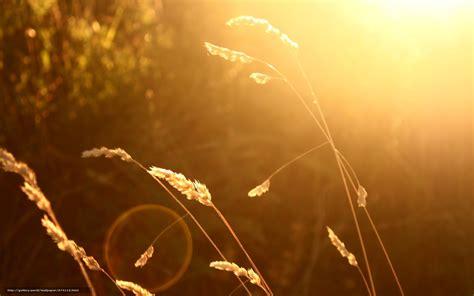bureau fond d 馗ran tlcharger fond d 39 ecran macro soleil widescreen fond fonds d 39 ecran gratuits pour votre rsolution du bureau 2560x1600 image 574115