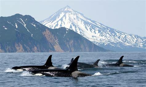 San Juan Islands Whale Watching Tours / Orcas, Lopez, Shaw