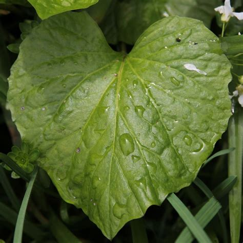 Pflanzenbestimmung Garten Swalif