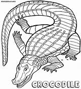 Crocodile Coloring Pages sketch template