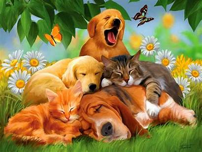 Animal Fall Wallpapers Definition 1080p 720p Animals