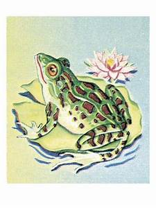 Frog on Lily Pad Art by Pop Ink - CSA Images - at ...