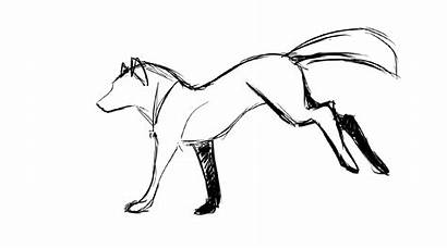 Wolf Running Animation Transparent Clipart Animated Test
