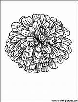 Zinnia Coloring Flower Zinnias Flowers Tattoo Sheets Skull Printable Drawing Drawings Sheet Colouring sketch template
