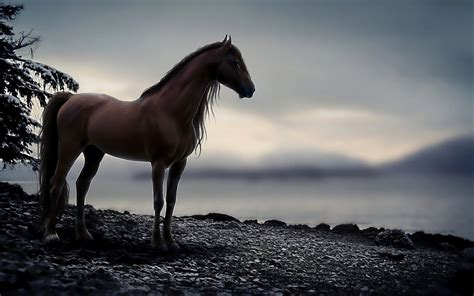 horse backgrounds cool wallpapers wallpapersafari fantastic