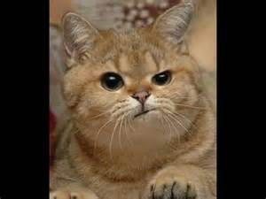 YouTube 2016 Funny Animals Cats