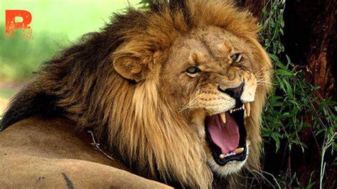 Fondos De Pantalla De Leones Redeemed Roaring Lion Christian Dubstep Youtube