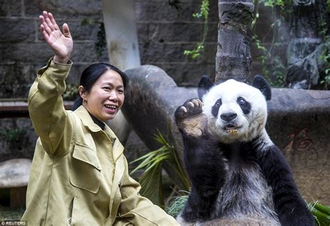 Basi The World's Second-oldest Panda Is Treated Like