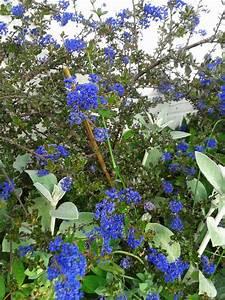 Lang Blühende Pflanzen : winterharte bl hende pflanzen gesucht seite 1 winterharte exotische pflanzen ~ Eleganceandgraceweddings.com Haus und Dekorationen