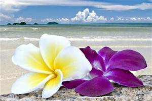 Tropical Beaches With Flowers   Desktop Backgrounds for ...