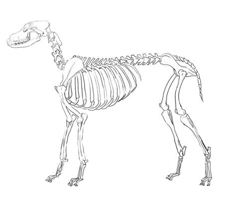 anatomy bone coloring sheet sketch coloring page