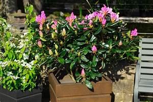 Winterharte Kübelpflanzen Hochstamm : k belgeh lze locken mit bl ten und fr chten gawina ~ Michelbontemps.com Haus und Dekorationen
