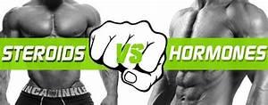 Steroides Vs Hormones  Quel Est Le Top Pour Les Bodybuilders    U2022 Top Steroids Online
