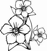 Coloring Flowers Flower Pages Printable Sheets Sheet Colour Colring Simple Toddler Drawing Adult Activities sketch template