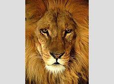Löwen – AnthroWiki