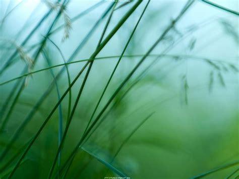 beautiful image  nature green scene simple