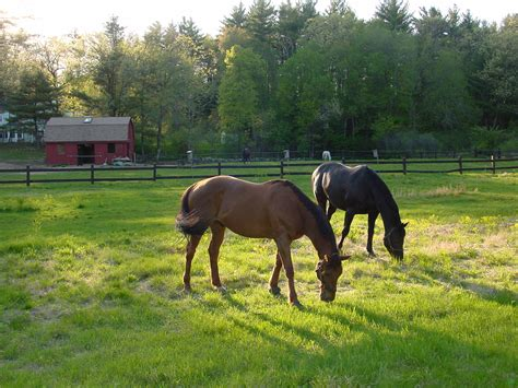 horses grass hay turned grazing unpredictable predictably were fed they equine worrying stopped once access much equineink