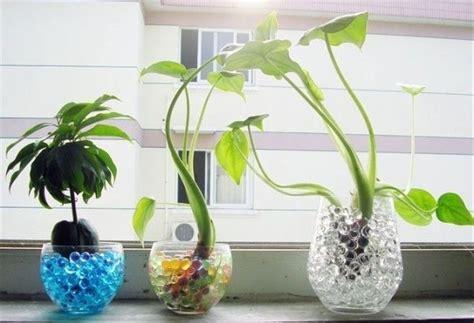 jual hidrogel biru media tanam cantik tanaman hias bunga