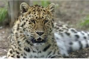Jungle Cat World