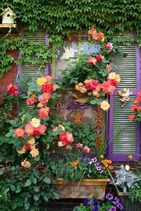 Mur De Fleurs : les plantes grimpantes beaucoup d 39 id es pour le jardin ~ Farleysfitness.com Idées de Décoration