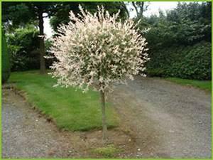 Petit Arbuste Fleuri : p pini res jean huchet accueil p pini re la ~ Premium-room.com Idées de Décoration